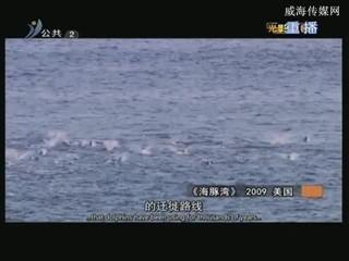 社会黑镜头启示录《海豚湾》