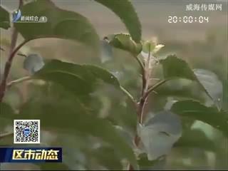 """临港区:""""汪疃模式""""引领美丽乡村建设新标准"""