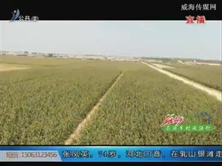 东滩村:集体代耕代种 农民轻松增收