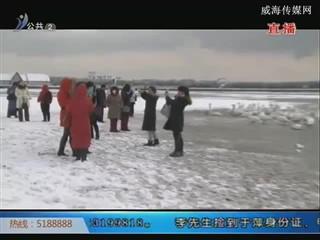 好运角天鹅湖:醉美的天鹅栖息地