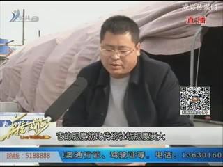 """美丽乡村威海行——乳山牡蛎:海中""""摇钱树""""(下)"""