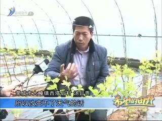 希望的田野 2017-01-12