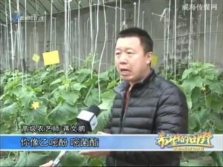 希望的田野 2017-02-11