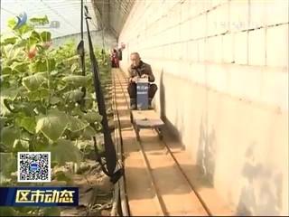文登:发展设施蔬菜 打造富民产业
