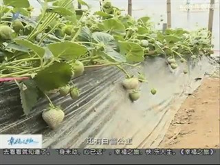 幸福之旅 2017-2-18(18:08:14-18:25:14)
