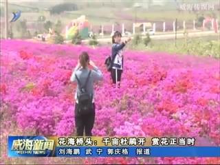 花海桥头:千亩杜鹃开 赏花正当时