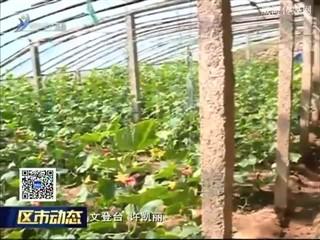 文登宋村镇:品牌蔬菜发展之路越走越宽