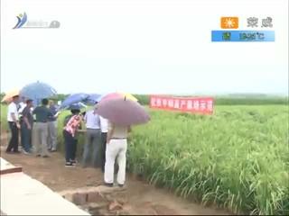 希望的田野 2017-09-15