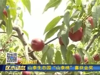 """宋村:山泰生态园""""山泰桃""""喜获金奖"""