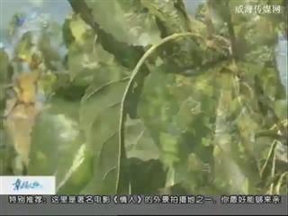 幸福之旅 2017-11-8(18:08:14-18:25:14)
