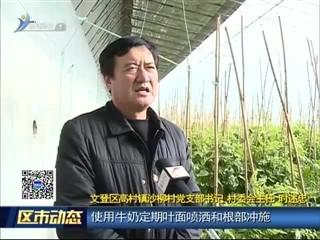 文登区高村镇沙柳村:特色产业托起百姓增收致富梦