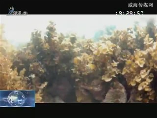 魅力海洋 2018-2-20