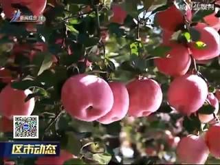 高区获得首个苹果有机农产品认证证书