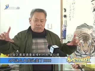 希望的田野 2018-03-29