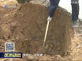 荣成:2018年将绿化27条(段)农村公路