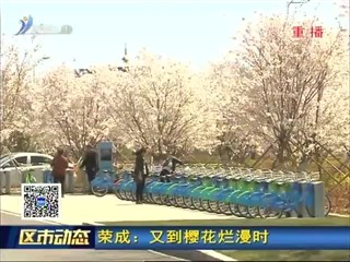 荣成:又到樱花烂漫时