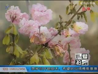 花开满滨城 赏春正当时