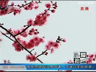盛春时节 花开遍野