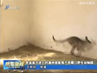 我省首次进口的澳洲袋鼠落户西霞口野生动物园