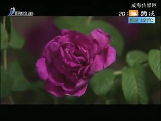 希望的田野 2018-04-10