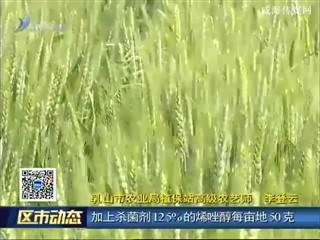 乳山:做好小麦病虫害防控 保障夏粮丰收
