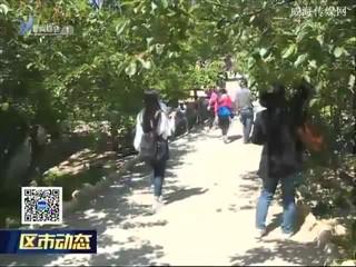 文登区:樱桃节带火乡村经济