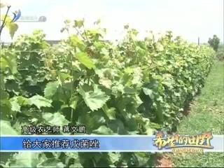 希望的田野 2018-06-23