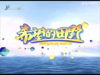 希望的田野 2018-07-07