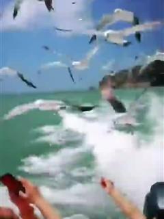 海驴岛赏海鸥
