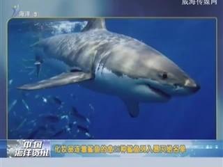 蓝色海洋 2018-8-9(19:25:17-20:49:17)
