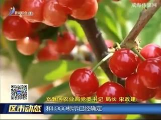 """文登区:念好""""农字经"""" 创先争优添亮色"""