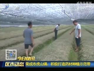 荣成市虎山镇:积极打造药材种植示范带