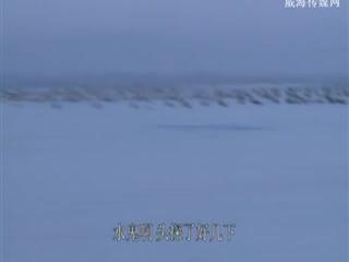 我要去钓鱼 2018-09-16(20:20:01-20:50:00)