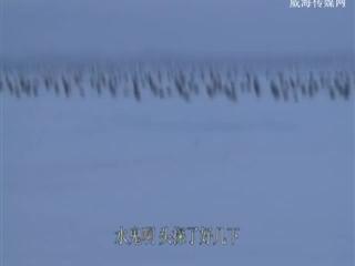 我要去钓鱼 2018-09-15(20:20:01-20:50:00)