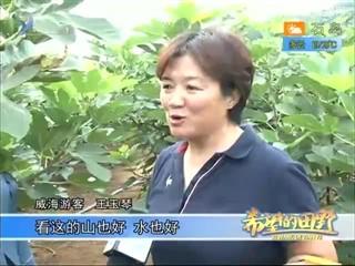 希望的田野 2018-09-11