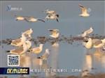 南海新区:水清天蓝 观鸟天堂
