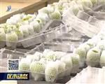 乳山市徐家镇:果农抱团发展 推动无花果业升级壮大