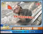 宁波某动物园内一猴子被游客投喂辣条:辣到崩溃!