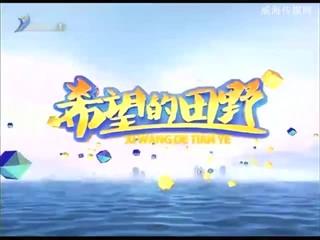 希望的田野 2018-10-02