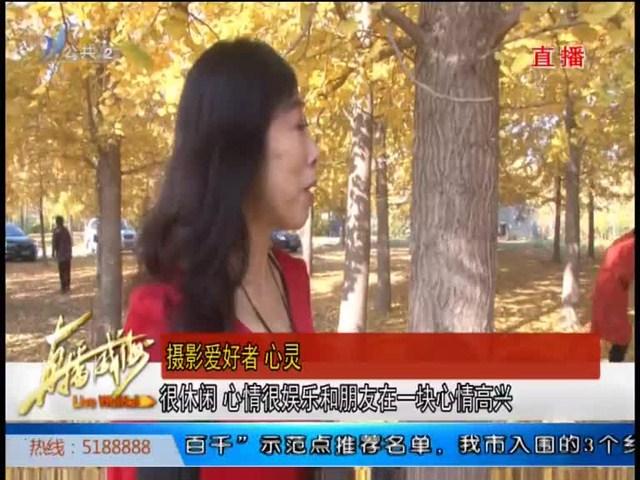 文登泽头镇:绝美银杏林,惊艳了秋天
