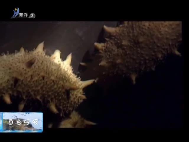 魅力海洋 2018-11-19(19:45:00-20:00:00)