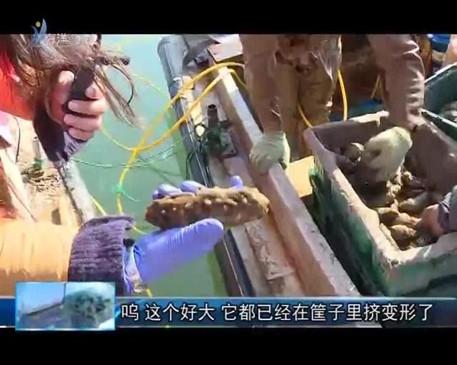 魅力海洋 2018-11-06(19:45:00-20:00:00)