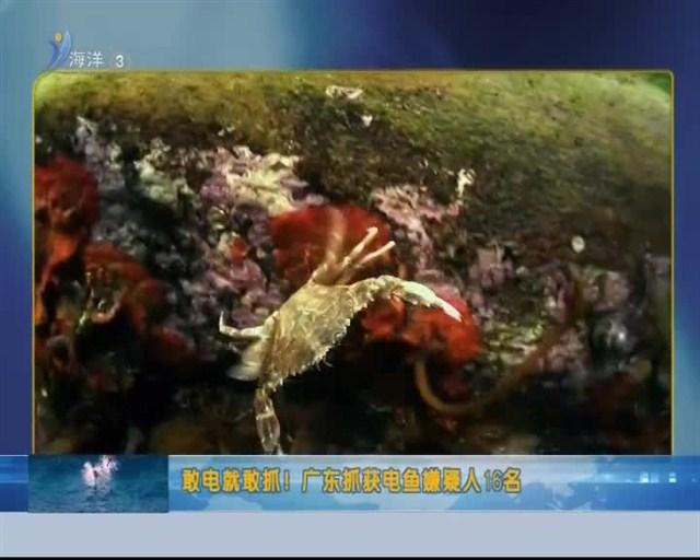 中国海洋资讯 2018-11-06(20:00:00-20:20:00)