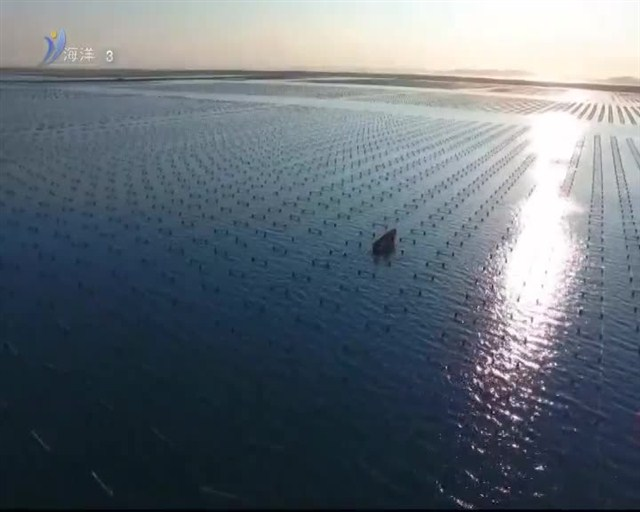 魅力海洋 2019-01-21(19:45:00-20:00:00)